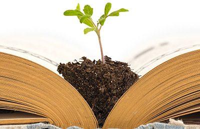Eine Pflanze wächst in der aufgeschlagenen Bibel