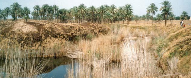 Babylon im Irak (Foto: Hubertus Brantzen)