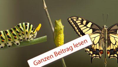 Raupe, die sich verpuppt und zum Schmetterling wird,